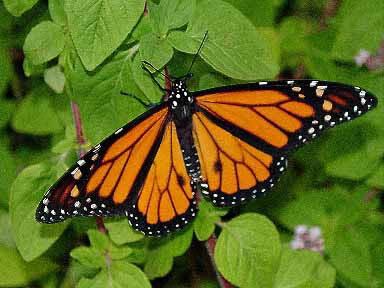 20060602130823-mariposa.jpg