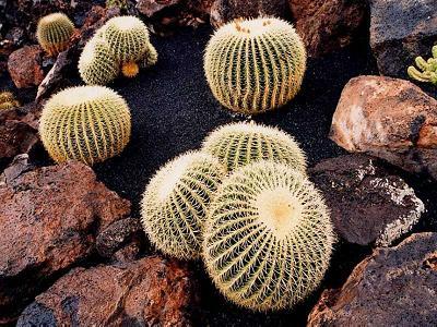 20060706164552-cactus.jpg